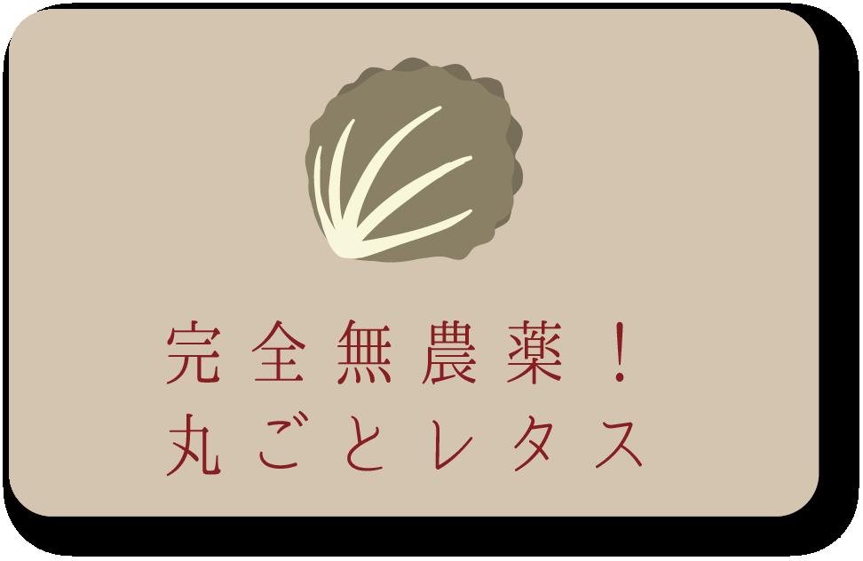 産地直送宮崎のとれたて野菜